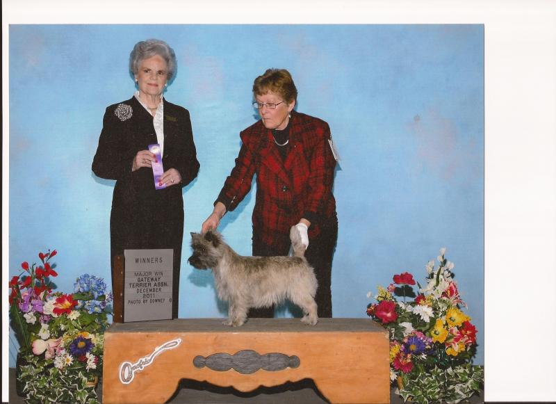DeeDee winning a 3pt major at the Gateway Terrier Assoc.